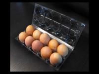 Cofraje oua gaina cu 10 compartimente