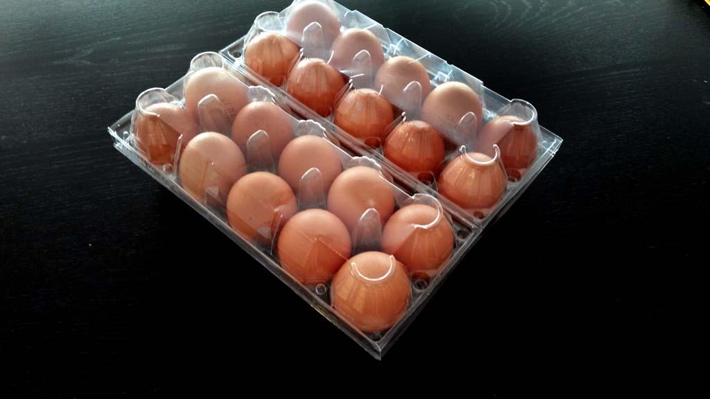 Cofraje 20 oua gaina